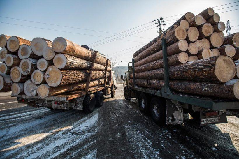 Двадцать нелегальных лесозаготовителей предстанут перед судом в Приангарье