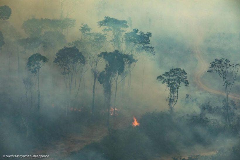 Greenpeace: сибирские пожары не прошли даром для всей планеты