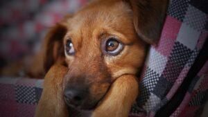 Концепцию развития приютов для животных представят в Приангарье в декабре